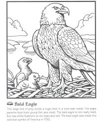 Bald Eagle Coloring Page Bald Eagle Attack Birds Coloring Pages For