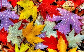 Thanksgiving Leaves Wallpapers on ...
