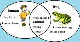Venn Diagram Ideas Kids Compare Contrast Lesson For Kids Definition Examples Video