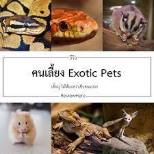 ReviewHere - รีวิว คนเลี้ยง Exotic Pets...