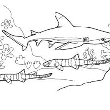 Small Picture Shark Coloring Pages Free Printable Coloring Pages Angel Shark