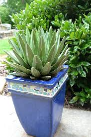low maintenance outdoor potted plants and flowers outdoor designs easy garden plants interesting low maintenance outdoor