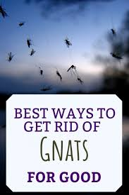 Gnat Identification Chart What Causes Gnats And How To Get Rid Of Them Dengarden