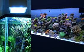 fish tank lighting ideas. Full Size Of Fish Tank Light Awful Image Ideas Aquarium Lights Lighting Which To Choose 36 I