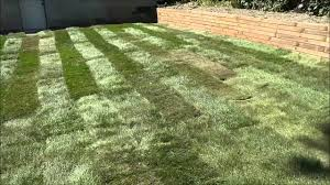 Diy Sod Laying Sod In My Backyard Diy Landscaping Youtube