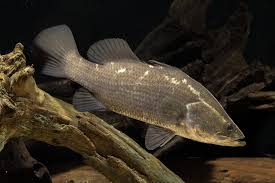 A Treasure Trove Of Freshwater Fish Biodiversity Museums
