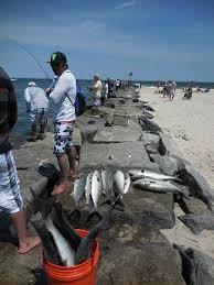 Fishing Update Delaware Surf Fishing Com