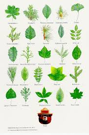 Best 25 Tree Leaves Ideas On Pinterest  Identification Des Fruit Tree Leaf Identification