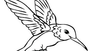 Arizona Cardinals Coloring Pages Cardinal Bird Printable Coloring