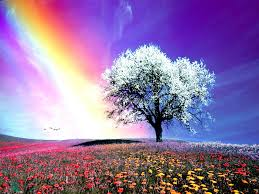 rainbow nature white hd pictures rainbow nature best photos