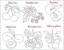 Fruits Coloring Pages Fruit Coloring Pages Cute Fruit Coloring Page