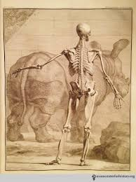 tab viii in albinus tabulae sceleti et musculorum corporis humani 1749