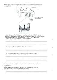 Venn Diagram For Osmosis And Diffusion Dialysis Vs Osmosis Venn Diagram Great Installation Of Wiring
