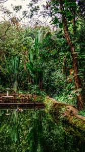 Rainforest Wallpapers posted by John ...