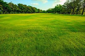 Royalty Free Grass Pictures Images and Stock Photos iStock