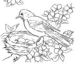 Small Picture Bird Coloring Pages For Adults Miakenasnet