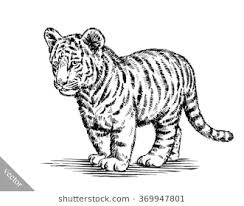 tiger black and white drawing. Unique White Engrave Ink Draw Tiger Illustration On Tiger Black And White Drawing R