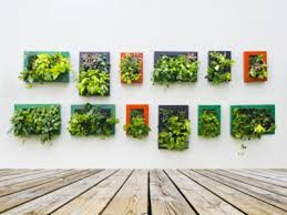 growing plants on walls tips on using