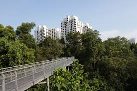 Mangroves in Singapore