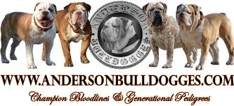 anderson olde english bulldogges