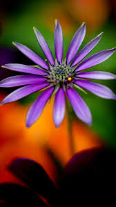 full hd wallpapers 1080p for mobile with purple flower full hd high definiton wallpapers amazing