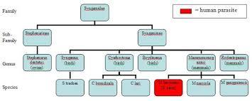 File Taxonomy Chart Jpg Wikimedia Commons