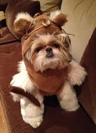 best 25 ewok dog costume ideas on funny dog costumes baby bulldogs and funny puppies