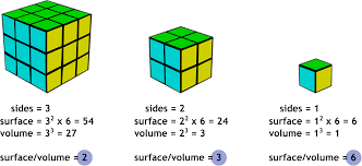 What Is Volume In Science Surface Area To Volume Ratio Oben Science 7e