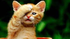 Cute Cat HD Wallpapers - Wallpaper Cave