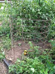 Diy tomato cage Sturdy Empty Tomato Cage In Greenhouse Tomato Headquarters Tomato Cages Stakes Or Trellises Which Is Best For Supporting
