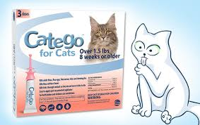 10 best flea treatments for cats