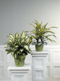 Urns, decorative baskets and carved containers are available at your local  hardware center or plant nursery.