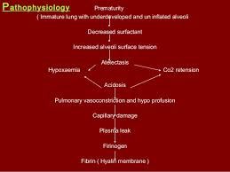 Ards Pathophysiology Flow Chart Respiratory Distress Syndrome