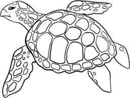 Small Picture how to draw a sea turtle step 5 Art with Turtles Pinterest