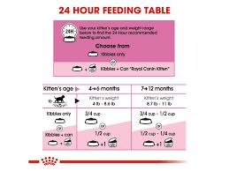 Kitten Feeding Chart Kitten Weight And Feeding Chart 2019