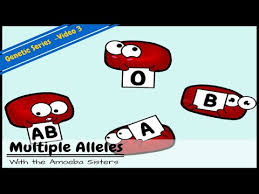 Multiple alleles (abo blood types) answer key by the amoeba. Multiple Alleles Abo Blood Types And Punnett Squares Youtube