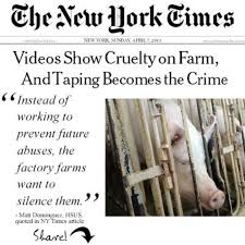 best factory farming images animales animal  factory farms