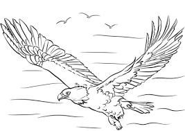 Disegno Di Aquila Calva Con Le Ali Spiegate Da Colorare Disegni Da