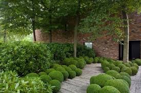 Small Picture Formal but informal planting multi shaped box balls under