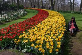 visitors to keukenhof walk past rows of flowers and a sculpture april 10 2016 the dutch bulb growers plant millions of tulip crocus amaryllis