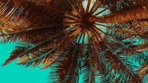 tropical palm tree desktop background