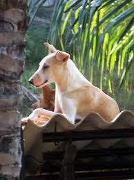 A Dog's Life in God's own Country: Photo story | Visit to the Dog Centre