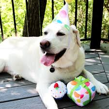 petsmart animals dogs. Perfect Animals PetSmart Launches FirstEver Birthday Collection With Festive Items To  Celebrate Birthdays And Gotcha Days Pets  Business Wire With Petsmart Animals Dogs
