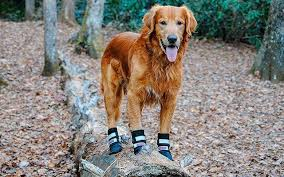 Qumy Dog Boots Size Chart Top Best Dog Boots For 2019 The Dog Hug