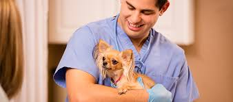 Veterinary Technician Job Description And Duties | What You'll Do