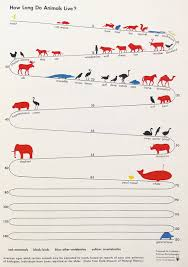 Lifespan Chart Chart Showing The Average Life Spans Of Animals