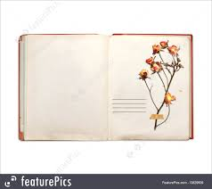 old book and dried flowers of rose royalty free stock picture