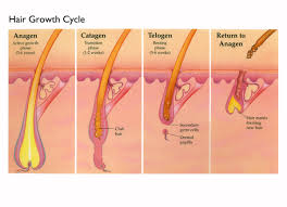 how fast hair grows and other