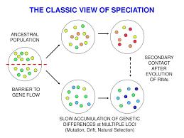 Macroevolutionary Patterns Custom Decoration