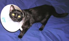 picture of superior post surgical feline canine appliance or dump the